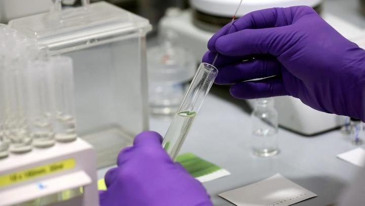 Investigadores australianos investigan sobre un fármaco antiparasitario que puede llegar a matar al coronavirus en 48 horas