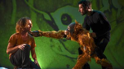 El rescate del primer orangután de un cautiverio en Sanse