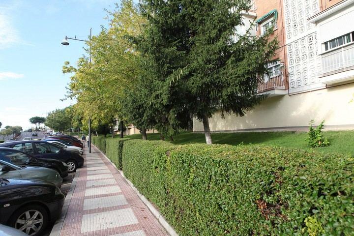 Nueva Campaña Verde en Alcobendas para la reposición de árboles y plantas