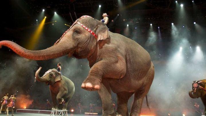 San Sebastían de los Reyes permite de nuevo los circos con animales trás 4 años de prohibicón