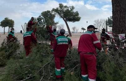 Sanse evalúa los daños en su patrimonio verde tras el paso de Filomena