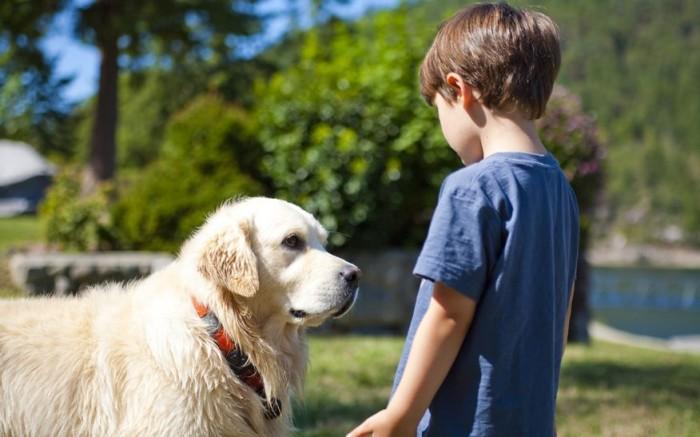 Trabajo con perros para mejorar las habilidades de aprendizaje