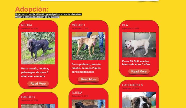 'Sanse Adopta' servicio de rescate para mascotas abandonadas