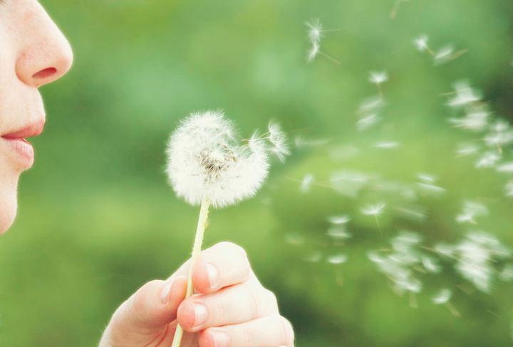 Consulta los niveles de polen en la web del Ayuntamiento de Alcobendas