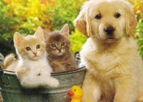 Feria de Adpoción de Mascotas en Alcobendas