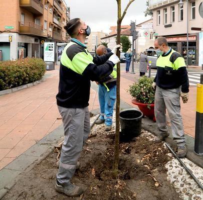 Alcobendas planta 1.028 árboles tras el paso de Filomena