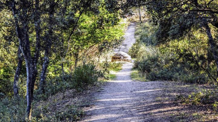 Vuelve la naturaleza a Alcobendas