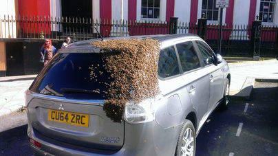 20.000 abejas persiguen un coche durante 24 horas