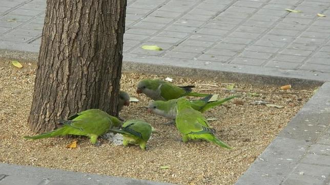 Imagen de cotorras alimentándose en un árbol