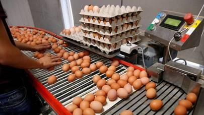 La Policía Local de Alcobendas controlará la compra masiva de huevos en Halloween