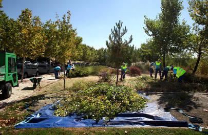 Labores y mantenimiento en Arroyo de la Vega
