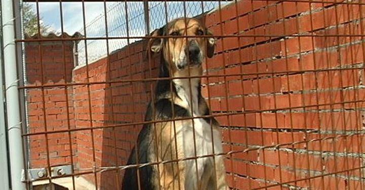 Polémica por la elección de los ponentes de la jornada de Adopción de Mascotas y Bienestar Animal