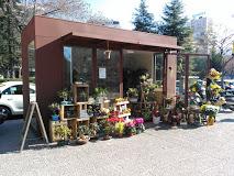 La floristería 'Mi Cactus Verde' abre sus puertas en el Encinar de los Reyes