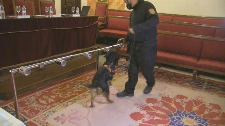 Un estudio piloto con perros para la detección de covid-19 valida 96% de casos