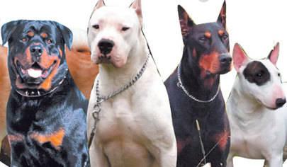 La Policía local detecta 16 infracciones en la campaña de control de perros peligrosos