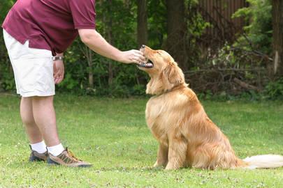 ¿Cobrarías una tasa a los dueños de los perros?