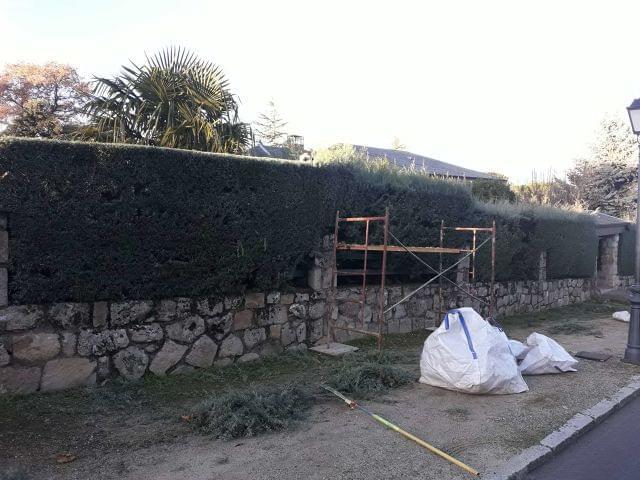 El Ayuntamiento de Alcobendas facilita un servicio municipal para la recogida de podas