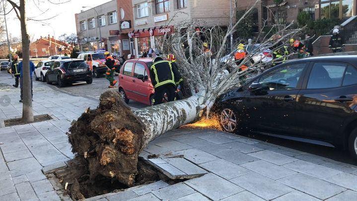 Imagen de un árbol que se cayó por el fuerte viento en la tarde ayer, domingo 19 de enero. Foto publicada por el 112 de la Comunidad de Madrid #BomberosCM